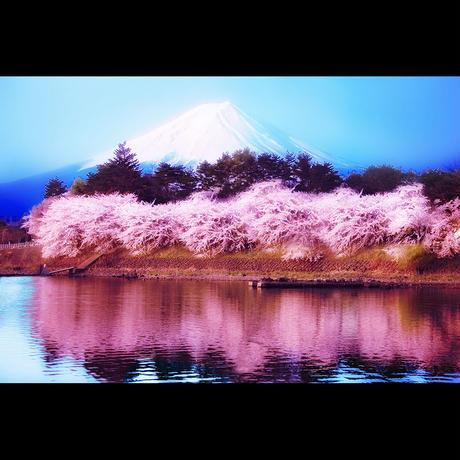 残雪の富士(LLサイズ)