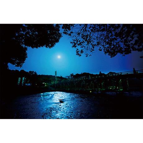 宇治橋と夜桜(Mサイズ)