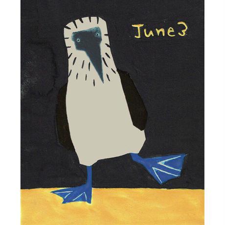 【日本画】6/3 Blue-footed boobyアオアシカツオドリ『366DAYS』