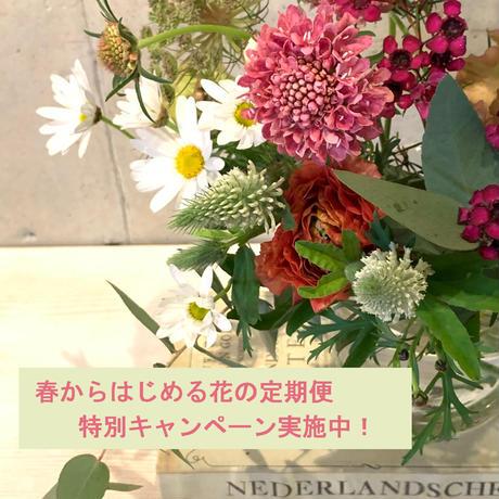 Acorの花の定期便◆◆土曜日便◆◆