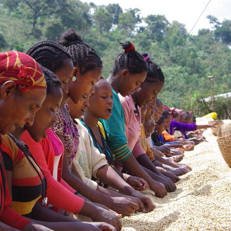 イルガチェフェ G1 コンガ農園 エチオピア 1kg