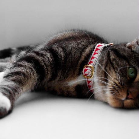 SEE SCOUT SLEEP Cat Collar Nice Grill (Cream x Vermillion)