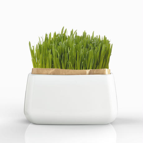 【にゃんベジ栽培セット】猫草,毛玉の予防に!ストレス解消に!