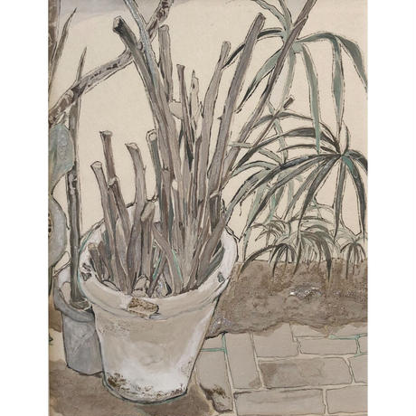 小河彩乃 「ornamental foliage plants Ⅱ」