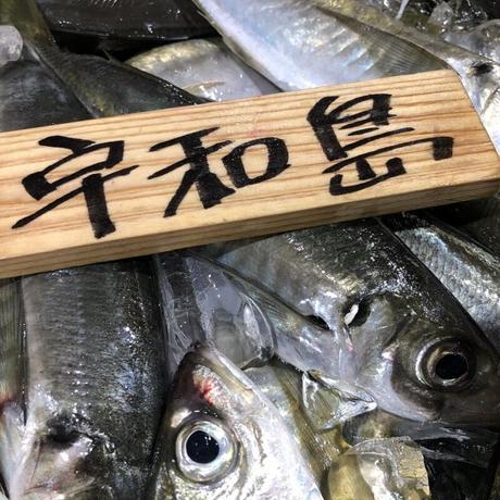 宇和海の旬の鮮魚詰め合わせ 市場直送ボックス 5000円コース