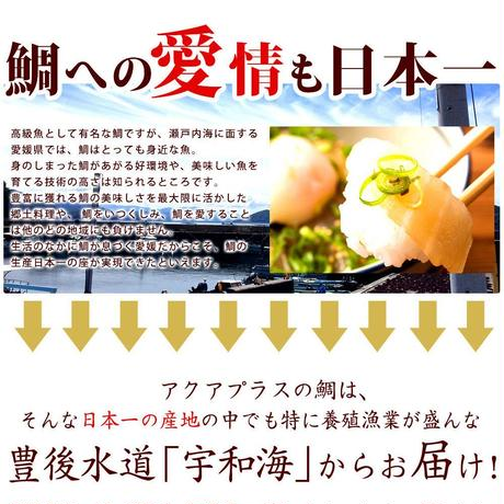 宇和島郷土料理  鯛めし 5食入りセット