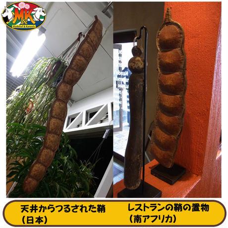 【送料無料】ズールーラブビーン モダマ 豆 キーリング187