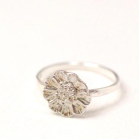 ring/S19-S0-0320