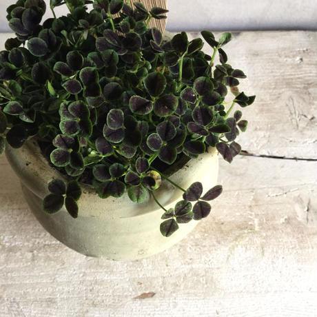 5c68b2ceaee1bb131f237330