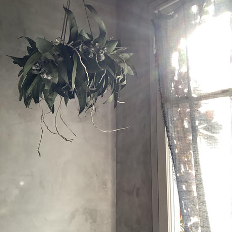 Hanging Dried 3Mixed Eucalyptus Wreath (ユーカリ3種のハンギングリース)