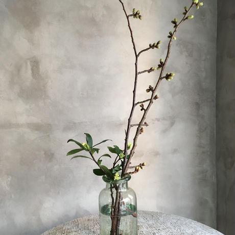 Classical Glass Bottle Flower Vase (クラシカル ガラスボトル フラワーベース)0.75L