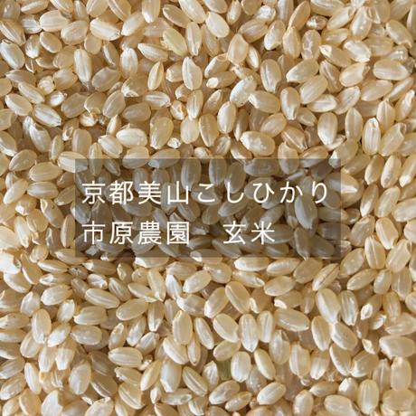 京都美山こしひかり 市原農園 玄米 5kg(農薬・化学肥料不使用)