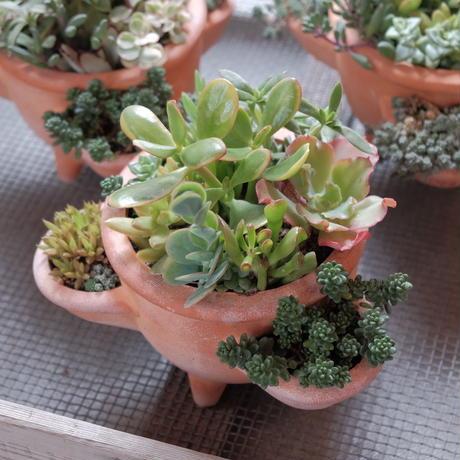 脚つきポットの多肉植物