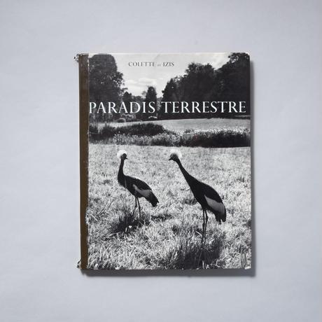 COLETTE et IZIS PARADIS TERRESTRE / IZIS(イジス)