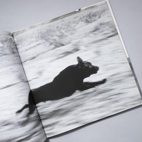 DOGS CHASING MY CAR / John Divola (ジョン・ディボラ)