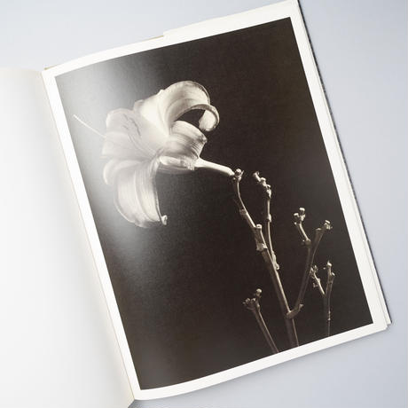 BOTANICA / Tom Baril(トム・バリル)