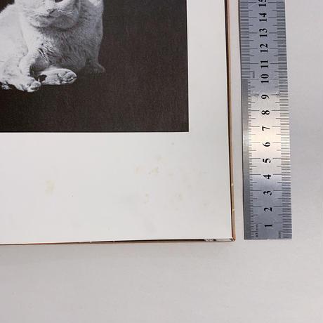 猫のいる場所 Where Cats Were / 武田花(Hana Takeda)