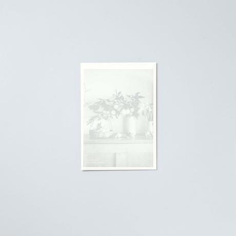 [新刊] 2021 ポストカード 花と果実 / 椿野恵里子(Eriko Tsubakino)