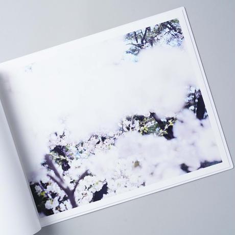 SAKURA / 鈴木理策(Risaku Suzuki)