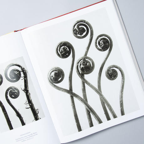 The Complete Published Work / Karl Blossfeldt(カール・ブロスフェルド )