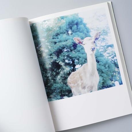 AILA / 川内倫子(Rinko Kawauchi)