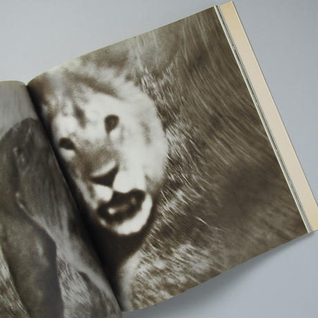 The End of the Game / Peter beard(ピーター・ビアード)