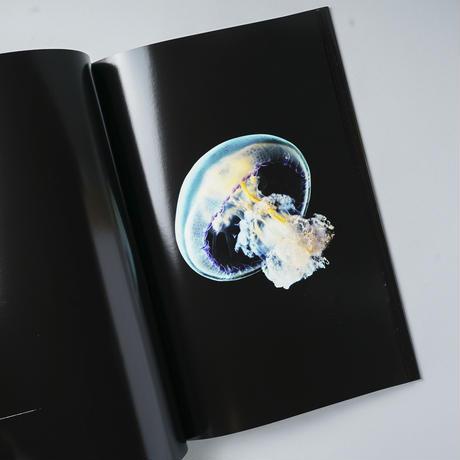 MEDUSA / Guido Mocafico (グイドモ・カフィコ)