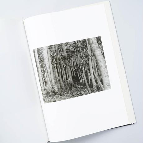 [サイン入/Signed] 森の襞 Silent respiration of forests / 志鎌猛 (Takeshi Shikama)