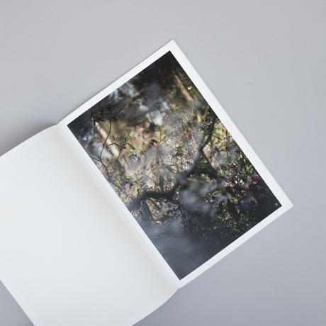 Hidden Sites a photographic voyage of discovery / Terri Weifenbach (テリ・ワイフェンバック)