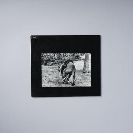 The Animals / Gerry Winogrand(ゲイリー・ウィノグランド)