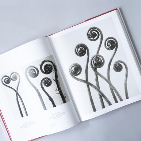 [未開封] The Complete Published Work / Karl Blossfeldt(カール・ブロスフェルト)