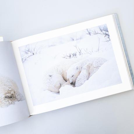星野道夫の仕事2 北極圏の生命 / 星野道夫(Michio Hoshio)