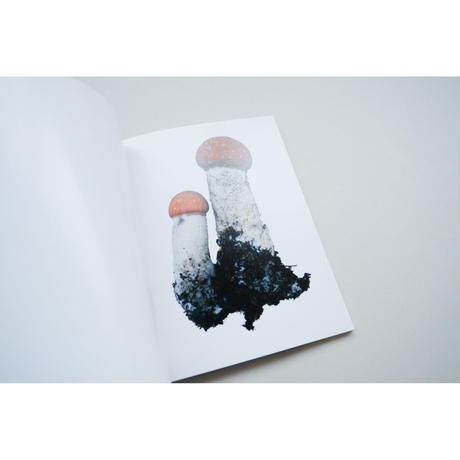 新『SCANDINAVIAN MUSHROOM』Takashi Homma