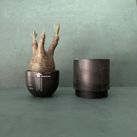 発根済 美肌 グラキリス VAG-02 × VALIEM BOWL (グラキリス専用鉢) S  / Black