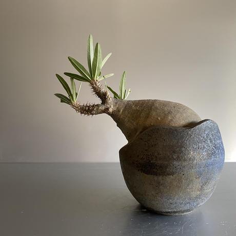 Gracilius  ×  Shelly pot 「Ibushi Gin」 - 笠間焼 - C81