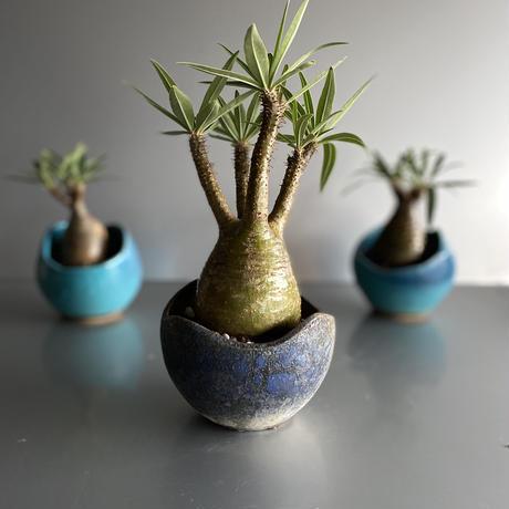 Gracilius × Shelly Pot「Ibushi Gin」 - 笠間焼  - C58