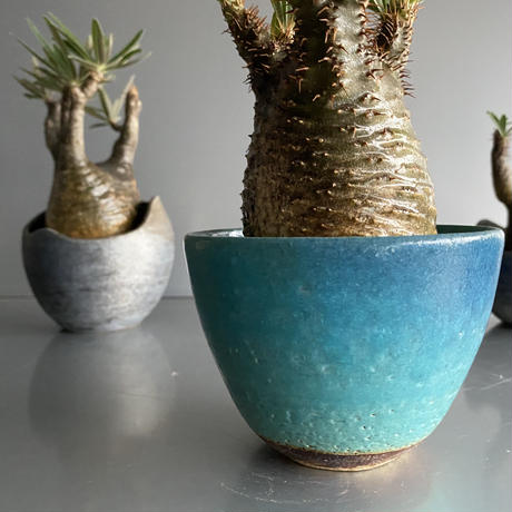 Gracilius  ×  Shelly pot flat「Turquoise blue」 - 笠間焼 - C53