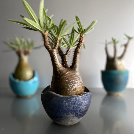 Gracilius × Shelly Pot「Ibushi Gin」 - 笠間焼  - C56
