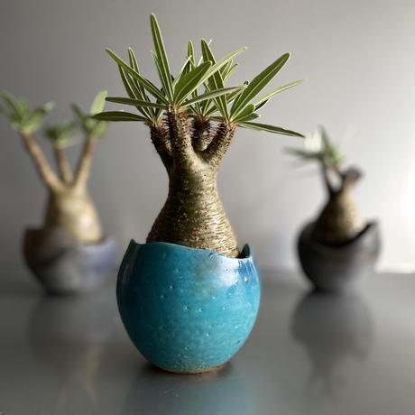 Gracilius  ×  Shelly pot 「Turquoise blue」 - 笠間焼 - C57