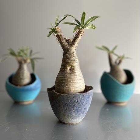 Gracilius × Shelly Pot「Ibushi Gin」 - 笠間焼  - C61