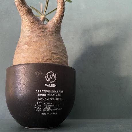 発根済 グラキリス VAG-11 × VALIEM ROUGH BOWL   S / Black
