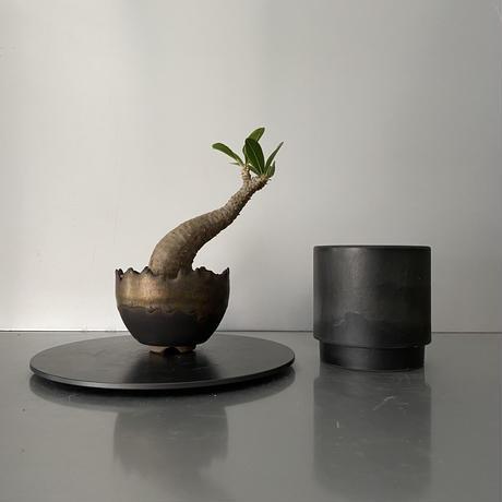 """発根済 ちびヘビ マカイエンセ 魔界玉  BG-178 × S.N.Pot """"丸""""-  crown - 3号鉢 [作家  """"根本峻吾""""]"""