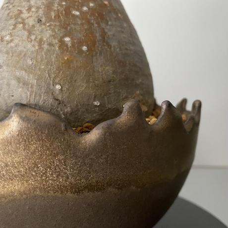 """発根済  中玉  グラキリス BG-191 × S.N.Pot """"丸""""- crown - 5号鉢 [作家  """"根本峻吾""""]"""