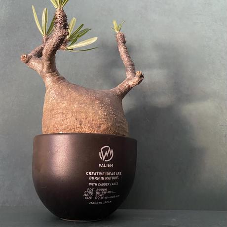 発根済 グラキリス VAG-12 × VALIEM ROUGH BOWL   M / Black