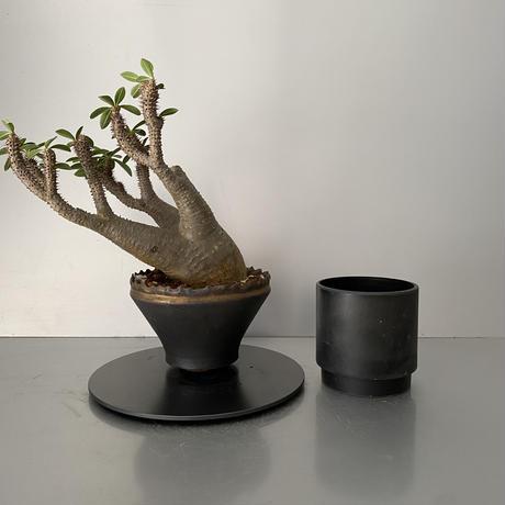 """発根済 魔界玉 マカイエンセ BG-210 × S.N.Pot - crown - 5号鉢 [作家  """"根本峻吾""""]"""