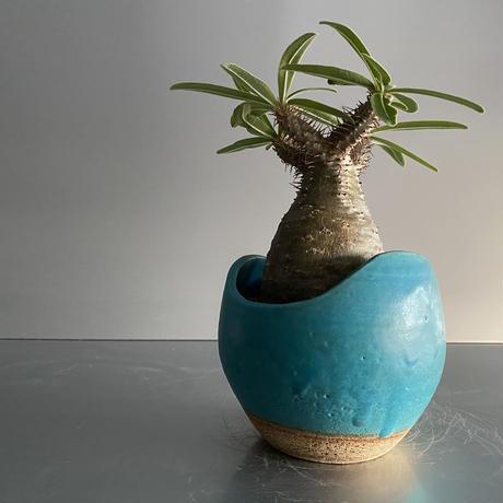Gracilius  ×  Shell pot S「Turquoise blue」 - 笠間焼 - D15