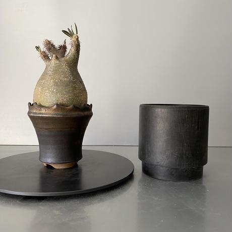 """発根済 グラキリス 現地株 BG-158 × S.N.Pot - crown - 3号鉢 [作家  """"根本峻吾""""]"""
