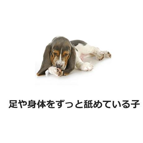 犬猫用なめ癖直しスティック42g(ペットキン Petkin)