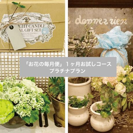 「お花の毎月便」1ヶ月お試しコース プラチナプラン