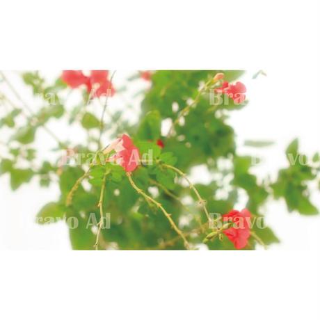 kubo-01-00002 写真(くぼりえ)